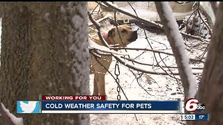 Keeping your pet safe and warm when the temperatures drop - Video