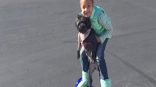 Little Girl Rides A Hoverboard With Her Dog