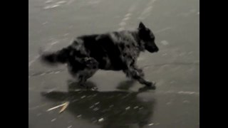 Dog struggles to play fetch on frozen lake - Video