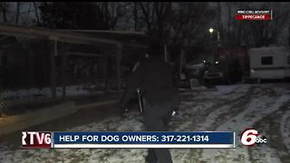 IACS overwhelmed by calls from people reporting pets left in the cold - Video