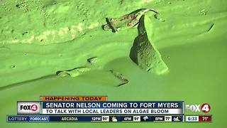 Experts say red tide and algae blooms cause health risks - Video