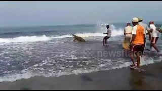 Man tries to catch crocodile with bare hands - Video