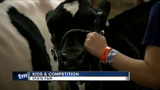 Beauty pageant for cows at the State Fair - Video