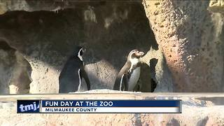 Families enjoy zoo tradition on Thanksgiving - Video