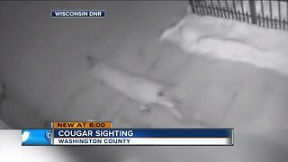Wisconsin DNR confirms cougar sighting in Washington County - Video