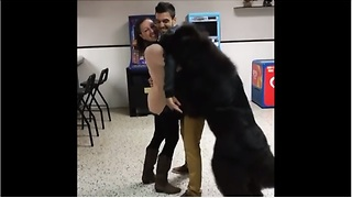Jealous Newfoundland refuses to let couple hug - Video