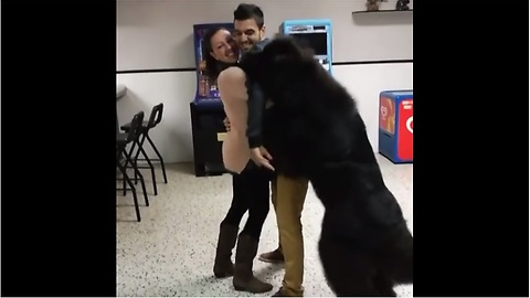 Jealous Newfoundland refuses to let couple hug