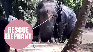 A village literally pulled together to rescue a stranded elephant