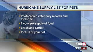 How to protect your pets during hurricane season - Video