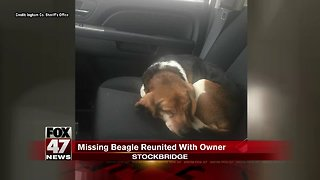 Missing dog reunited with owner months later