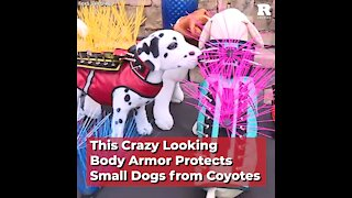 This Crazy Looking Body Armor Protects Small Dogs from Coyotes
