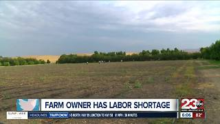 Kern County farm owner experiences labor shortage on his farms