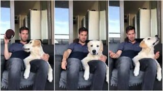 This golden retriever gets easily tricked