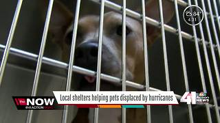 Local shelters help pets displaced by hurricanes - Video