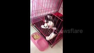 Dog tries to eat food through cage - Video