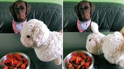 """Pup sees toy die from """"poisoned food"""", instantly spits out treat"""