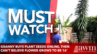 Granny Buys Plant Seeds Online, Then Can't Believe Flower Grows To Be 16' - Video
