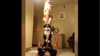 This Compilation Of Playful Dogs Will Definitely Brighten Your Day.  - Video