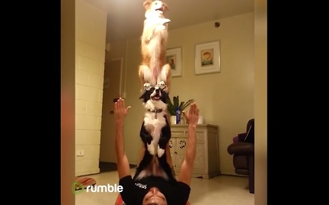 This Compilation Of Playful Dogs Will Definitely Brighten Your Day.