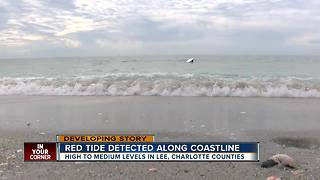 High to medium levels of red tide in Lee County - Video
