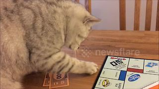 Attention seeking cat ruins Monopoly game - Video