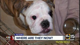 Woman's dead daughter's dogs given away after fight with cancer