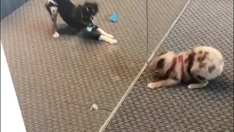 Puppies mimic each other's moves from behind glass