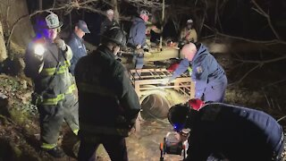 Labrador rescued from storm drain