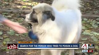KC animal control investigating alleged attempted dog poisoning - Video