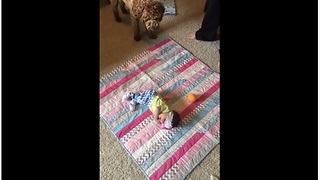 Dog wants newborn baby to play fetch with him