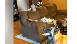Fascinated Dog Can't Keep Away From Wind Chime