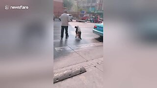 Dogs adorably jumps on bigger dog's back to cross street