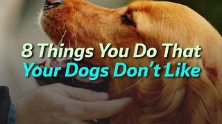 8 Things You Do That Your Dogs Don't Like