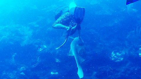Friendly shark approaches diver, gets pat on the head