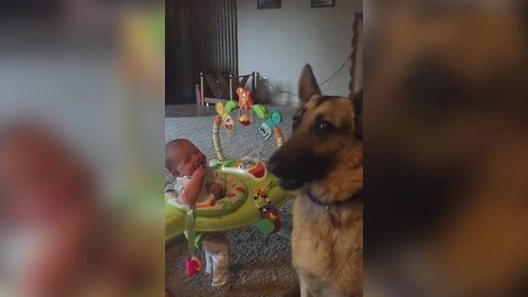 Baby Girl Laughs At A Dog Catching Popcorn