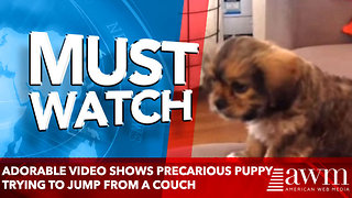 Adorable video shows precarious puppy trying to jump from a couch