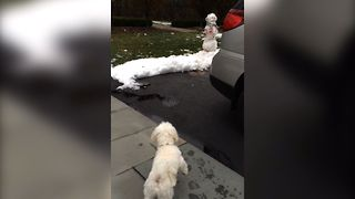 Dog vs Snowman - Video