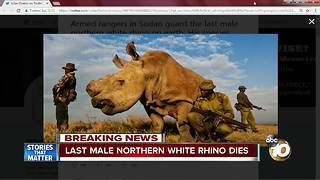 Last male northern white rhino dies - Video