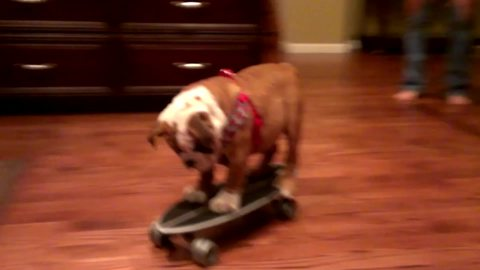 Dogs That Skateboard Are Too Cool