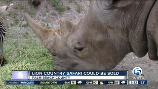 Lion Country Safari could be sold - Video