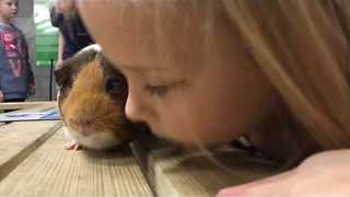 Little Girl Whispers Sound Advice to Adorable Guinea Pig - Video