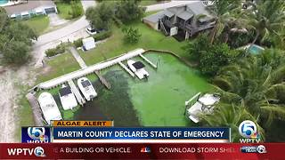 Martin County declares state of emergency over algae - Video