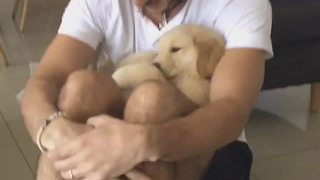 From Puppyhood To Adulthood, Golden Retriever Loves To Cuddle With Owner - Video