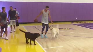 Klay Thompson Goes 1-on-2 vs Dogs - Video