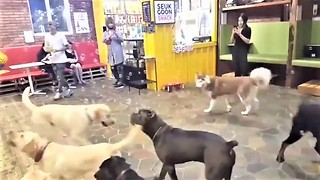 Excited dogs thrilled for epic bubble playtime
