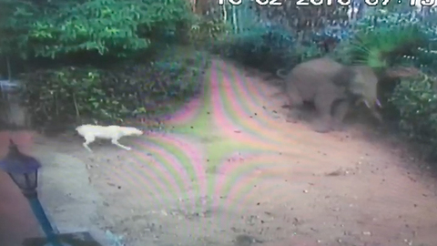 Baby elephant surprised boy and his dogs when it barged into their garden 'uninvited'