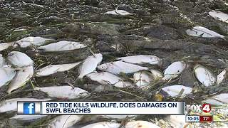 Red tide causes major fish kill