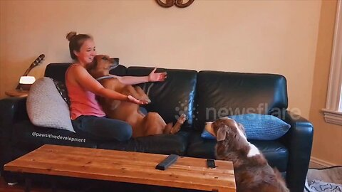 US dog learns how to trust fall with his owners