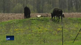 Manure irrigation ordinance passed in Kewaunee County - Video