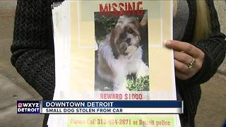 Small dog stolen from car in downtown Detroit - Video